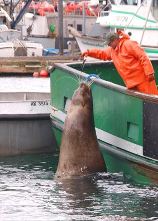 CWC2 Blog Kodiak Sea Lion_Resize