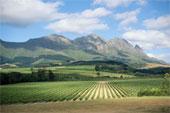 CWC3 Stellenbosch Wine Country